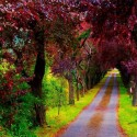 A Beautiful Path, Villaviciosa, Asturias, Spain
