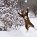 Cat playing in snow