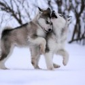 Cute Baby Wolves