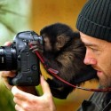 Funny Monkey Taking Picture Camera