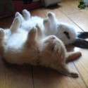 Funny Rabbits Sleeping