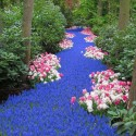 River of Flowers, Keukenhof Bulbflower garden, Holland