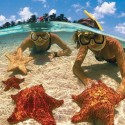 Starfish Beach, Cayman Islands