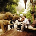 Tea with the Elephants, Thailand