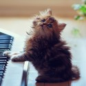 Want me to play you a song ?!
