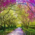 Spring, Central Park, New York, USA