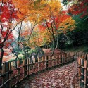 Autumn colors in Ritsurin Park , Takamatsu , Japan