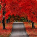 Crimson Autumn, Door County, Wisconsin, USA