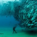 An amazing picture, taken near Cabo Pulmo, Mexico