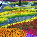 Flower Garden in Four Seasons Garden theme park, Everland, South Korea