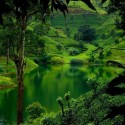 Lush green hills of Sri Lanka