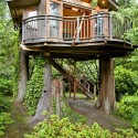 The Most Beautiful Tree House in The World