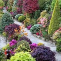 Beautiful combination of shrubs, trees and flowers