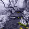 Into the Mystic, Appalachian Trail, Virginia, USA