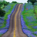 Texas Bluebonnets Highway