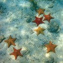 Wonderful Starfish Under Water