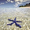 Starfish in Tahiti, French Polynesia
