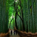 Bamboo Forest, Arashiyama, Japan