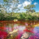 The Cano Cristales, La Macarena, Colombia