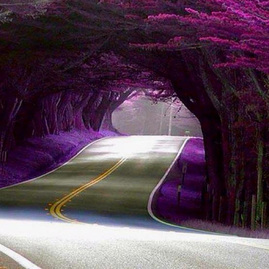 Amazing Street, California, USA