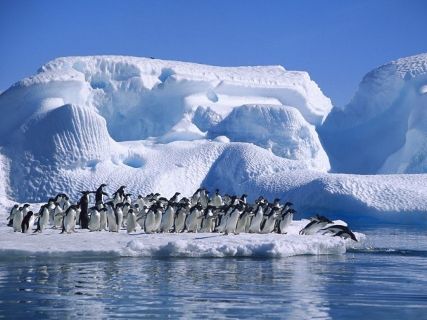 Lovely Penguins Waiting