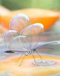 Translucent Butterfly …. So Lovely