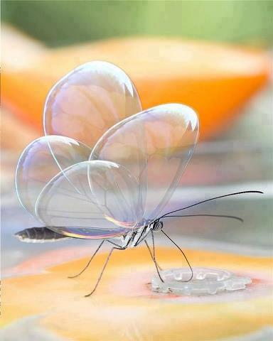 Translucent Butterfly .... So Lovely