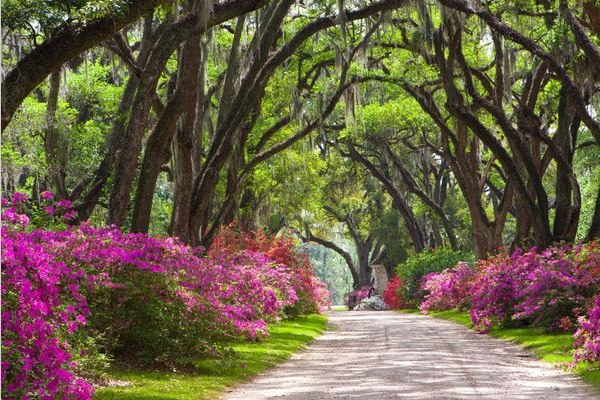 Wonderful Trees in Louisiana