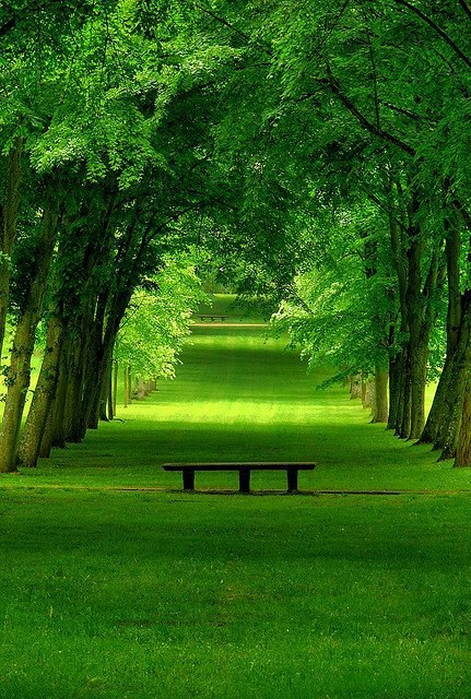 Beautiful Summer Park, France
