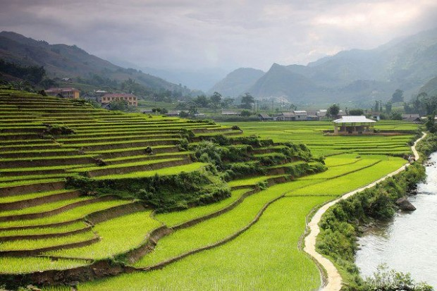 The terrace paddy field of Sapa Valley in northern Vietnam