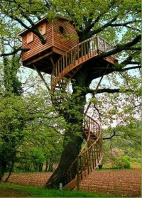 Amazing Tree House