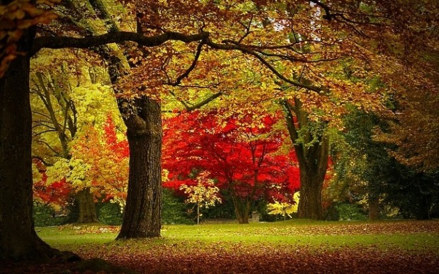 Autumn Red , Vancouver , Canada