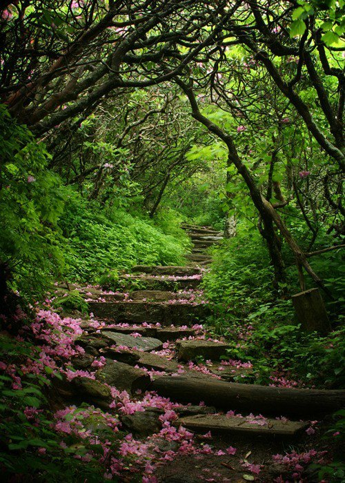 Craggy Gardens, Blue Ridge Parkway, North Carolina, USA