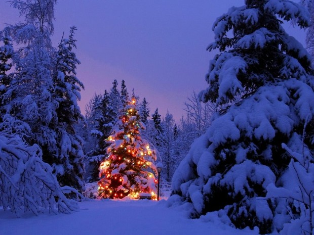 Decorated Christmas Tree In The Nature