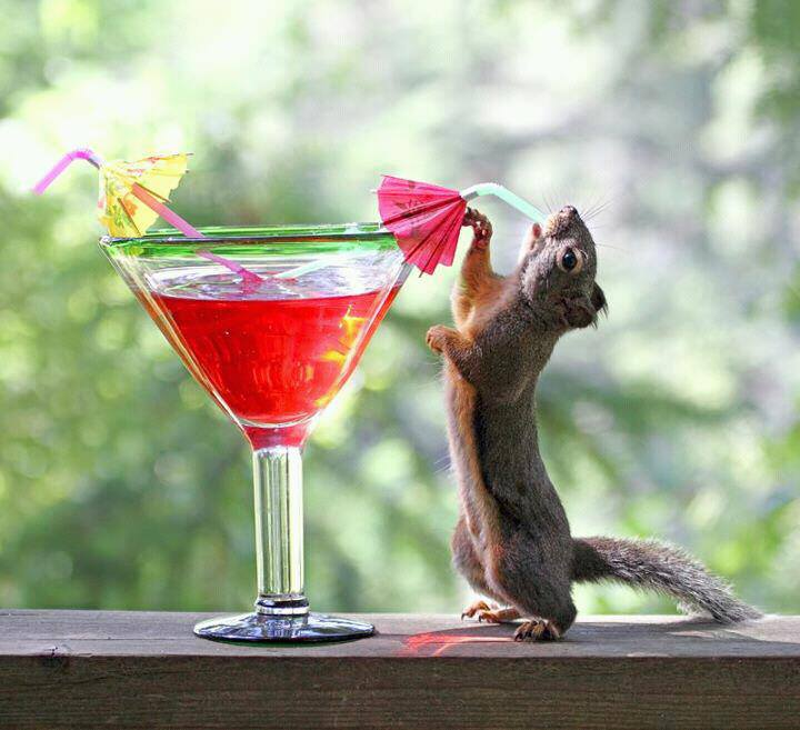 Funny Squirrel Drink Recipes