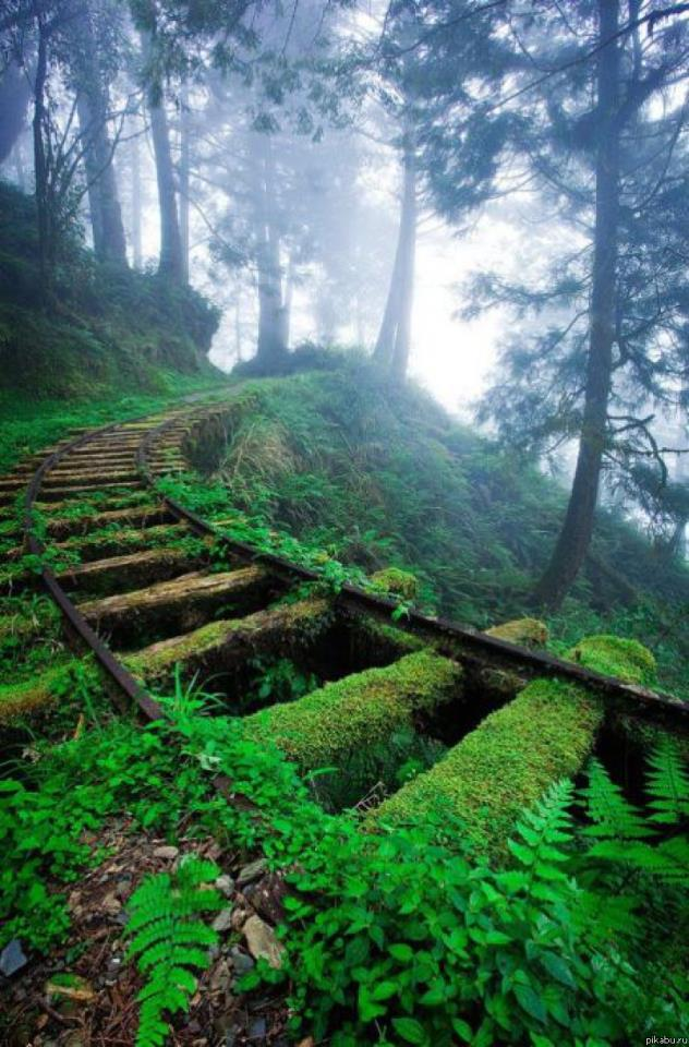 Overgrown rail tracks National Forest in Taiwan