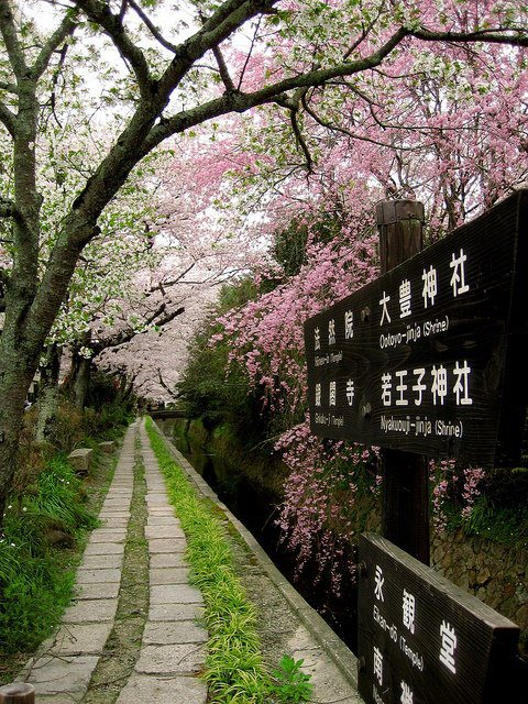 Philosopher's Path, Kyoto, Japan