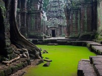 Ta Prohm Temple , Cambodia