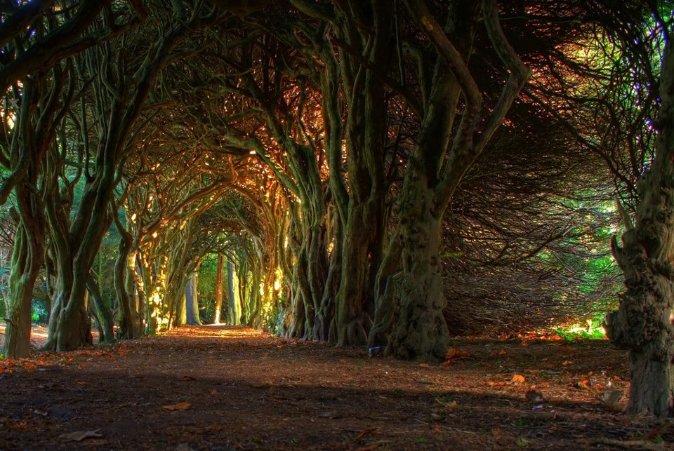 Tree Tunnel , Meath , Ireland