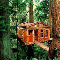 Treehouse , Port Washington , Oregon, USA