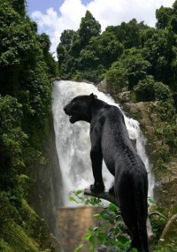 Black jaguar Behind the Waterfall in Eco-Park in Chiapas, Mexico