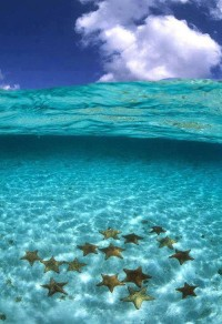 Clear Water Starfish .. Bora Bora