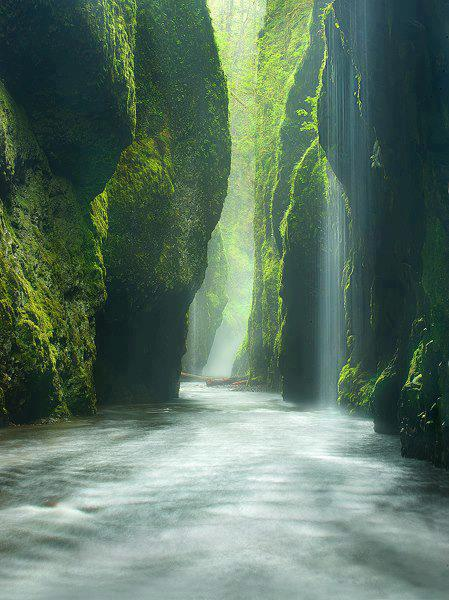 Rainforest Canyon, Oregon, Portland, USA