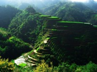 Rice Terrace Fields , Philippines