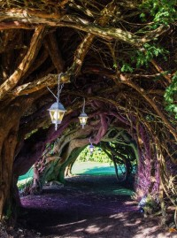 Yew Tunnel at Aberglasney Wales, England