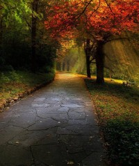 A Wonderful Place to Walk in Autumn