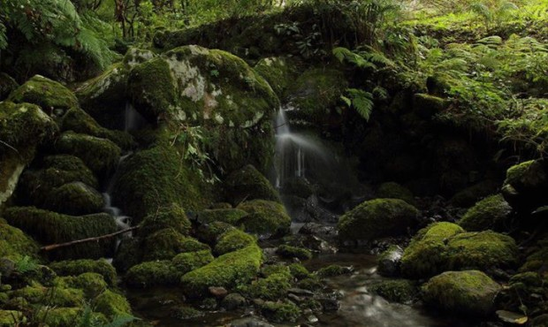 A lovely stream in the Laurel Forest, Madeira Island