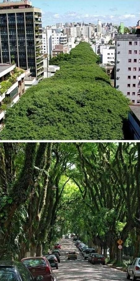 Beautiful tree-lined street in Porto Alegre, Brazil