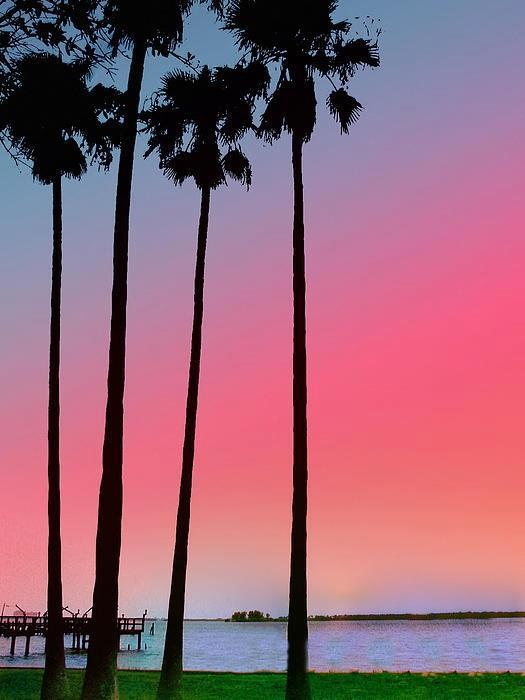 Sunset , Dunedin , Florida , USA