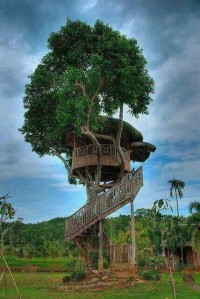 Wrap around treehouse